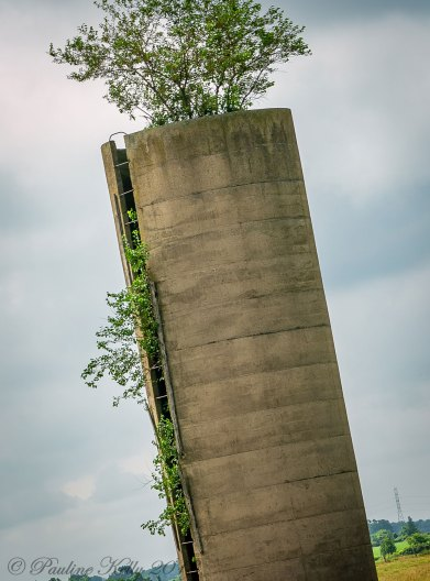 The leaning tower is now housing a tree.